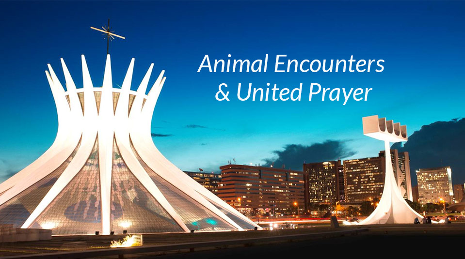 Animal Encounters & United Prayer – SAC/GAiN 2014