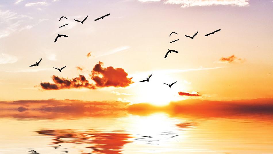 caderno de meditações para o por do sol