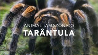 Animais: Tarântula – 1º Trimestral 2016