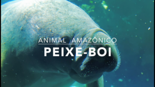 Animais: Peixe-boi – 1º Trimestral 2016