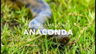 Anaconda – 1º Trimestral 2016