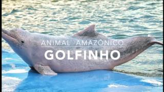 Animais: Golfinho – 1º Trimestral 2016