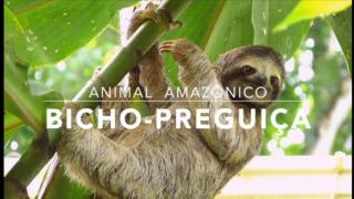 Animais: Bicho-preguiça – 1º Trimestral 2016
