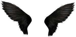 1192247_black_wings