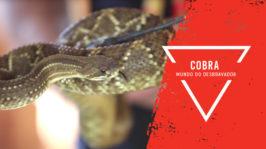 Vídeo Aula – Cobras
