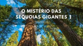 O mistério das sequoias gigantes – Parte 1