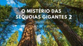 O mistério das sequoias gigantes – Parte 2