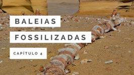 Baleias fossilizadas