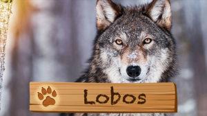 Lobos