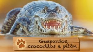 Guepardos, crocodilos e pitón