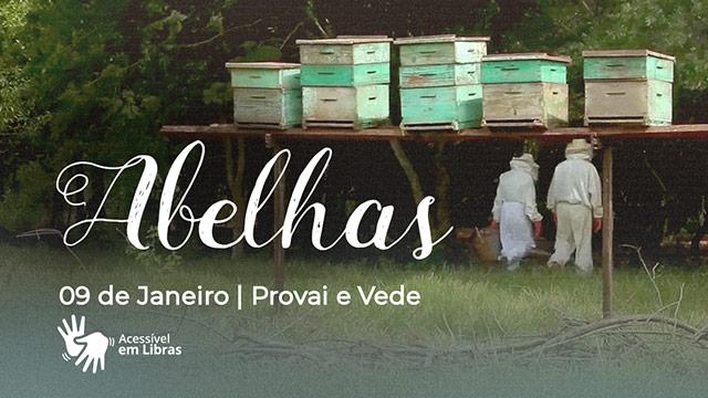 Abelhas – Libras