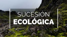 Sucesión geológica