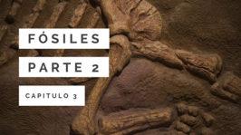 Fósiles 2