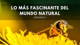 Lo más fascinante del mundo natural
