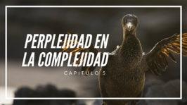 Perplejidad en la Complejidad