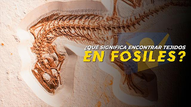 T3 ¿Tejidos biológicos en fósiles? ¿Qué significa?