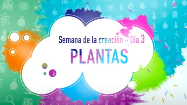 Día 3 – Plantas