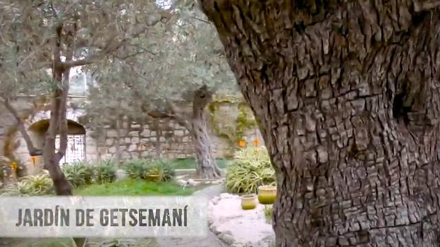 Jardín de Getsemaní