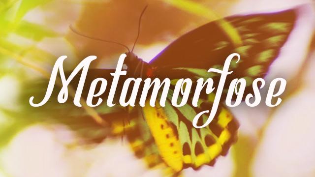 thumbnail - Metamorfose