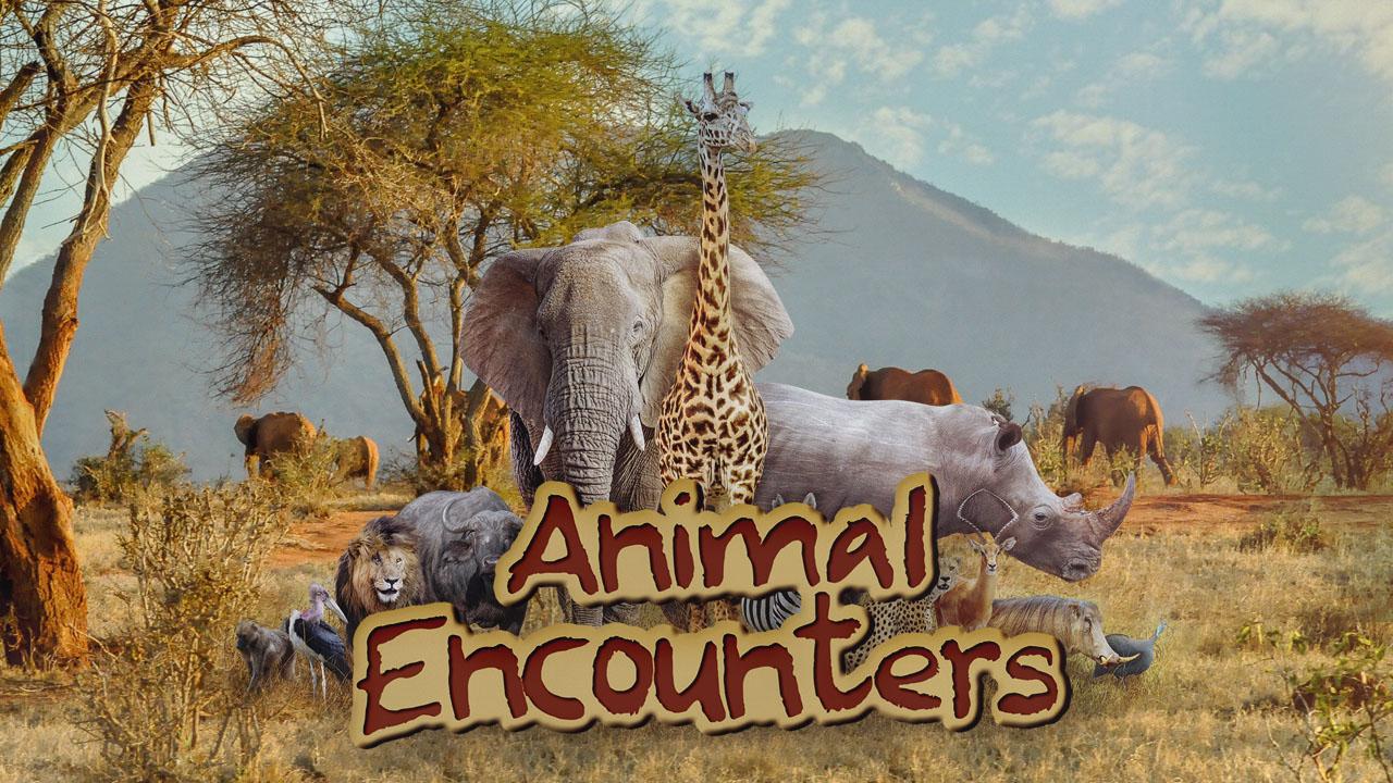 thumbnail - Animal Encounters