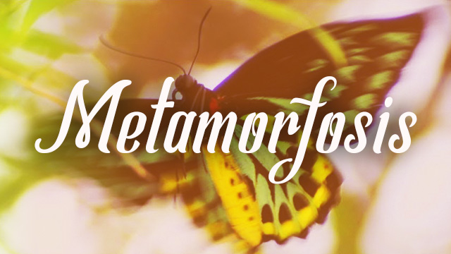 thumbnail - Metamorfosis