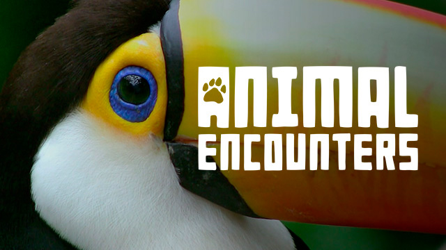 thumbnail - Animal Encounter - Costa Rica