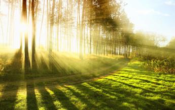 Sermão: O impacto do exercício físico na mente, no corpo e