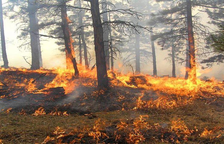 Incendio forestal en Portugal afecta a familias adventistas
