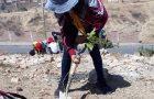 Conquistadores y guías reforestaron la Zona Mercado Abasto – Sucre con 1000 plantines