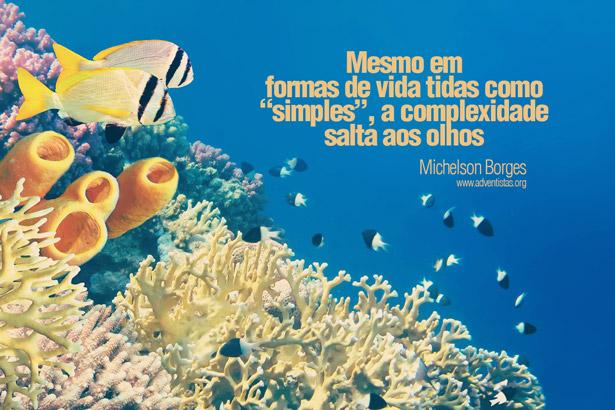 esponjas-do-mar