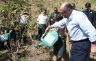 Desbravadores auxiliam governador de SP em plantio de árvores