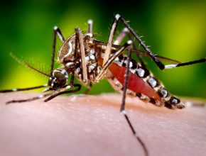 16742-close-up-of-a-mosquito-feeding-on-blood-pv