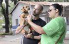 Pets e donos se confraternizam em Cãominhada no bairro da Mooca, SP