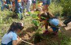 Voluntários realizam mutirão para plantio de árvores