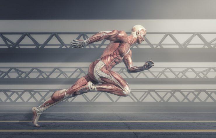 A complexidade do corpo humano aponta a um planejamento inteligente?