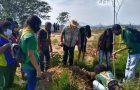 Em lembrança ao Dia da Árvore, Desbravadores realizam o plantio de mudas