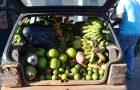 Mais de 70 famílias são beneficiadas com cestas de frutas