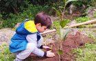 Alunos de Imbituba ganham mudas de árvores na Semana do Meio Ambiente