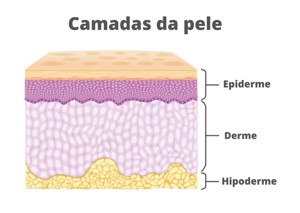 Imagem informativo sobre as três camadas que compõem a pele