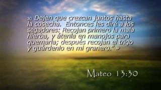 Mateo 13 – Reavivados por su Palabra – 14/11/2014