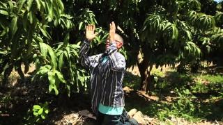 23/May. En el clima de la fe – Probad y Ved
