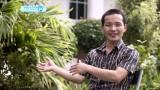 Iglesias Crecientes (Historias de Asia I)