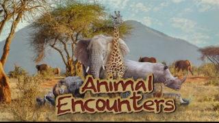 Playlist Animal Encounters | Feliz 7 Play