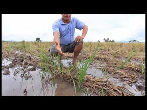 7/Jun – Provai e Vede: A colheita parte 1