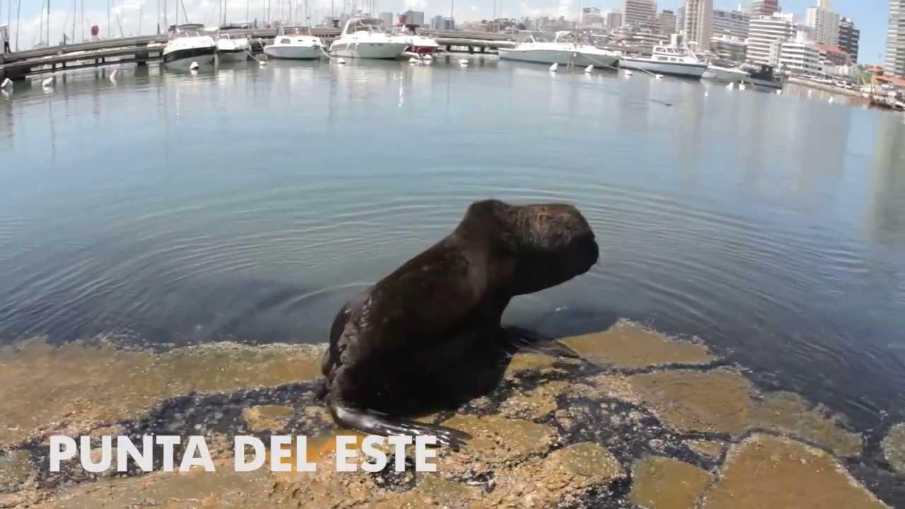 Esse é meu País: Uruguai – IV Campori DSA