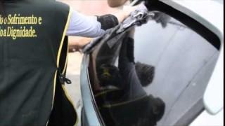 Revista NT – Desbravadores lavam carros de comunidade
