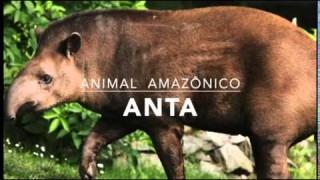Anta – 1º Trimestral 2016