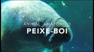 Peixe-boi – 1º Trimestral 2016