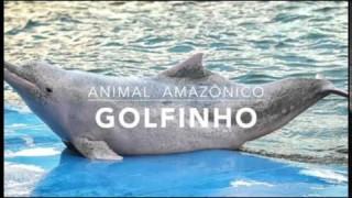 Golfinho – 1º Trimestral 2016