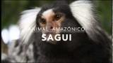 Sagui – 1º Trimestral 2016